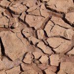 5. Dezember: Weltbodentag – World Soil Day