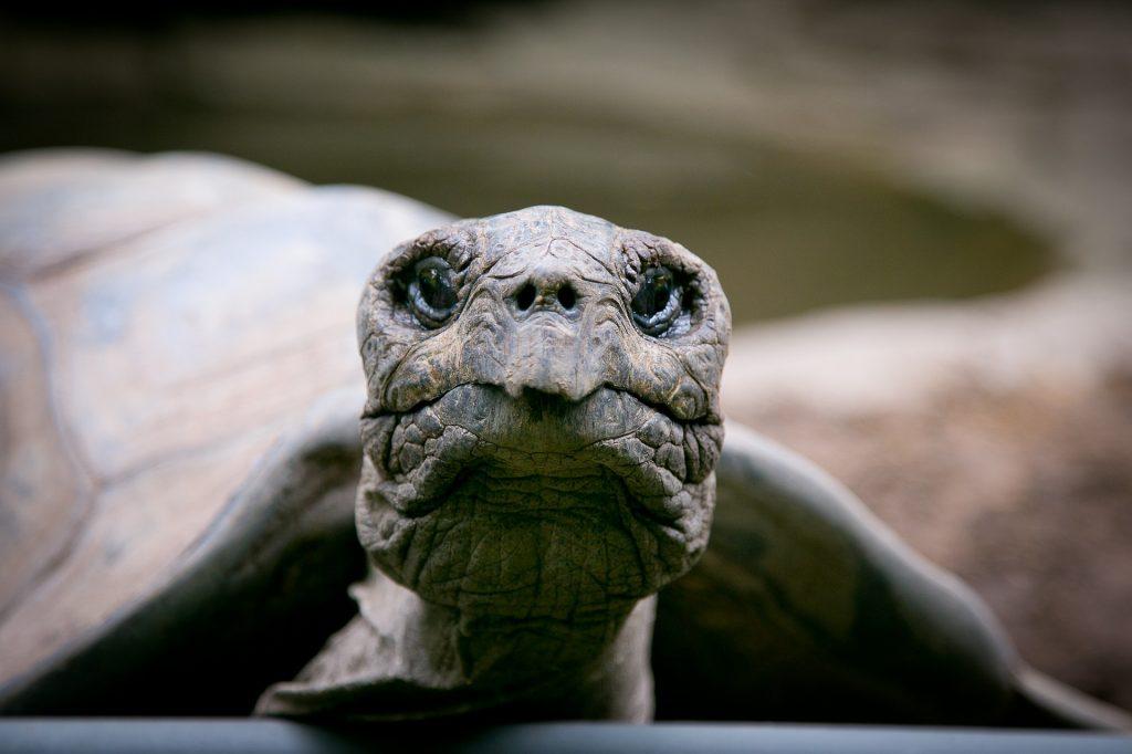 Weltschildkrötentag