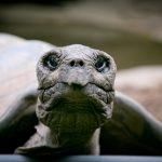 Umwelttag Weltschildkrötentag