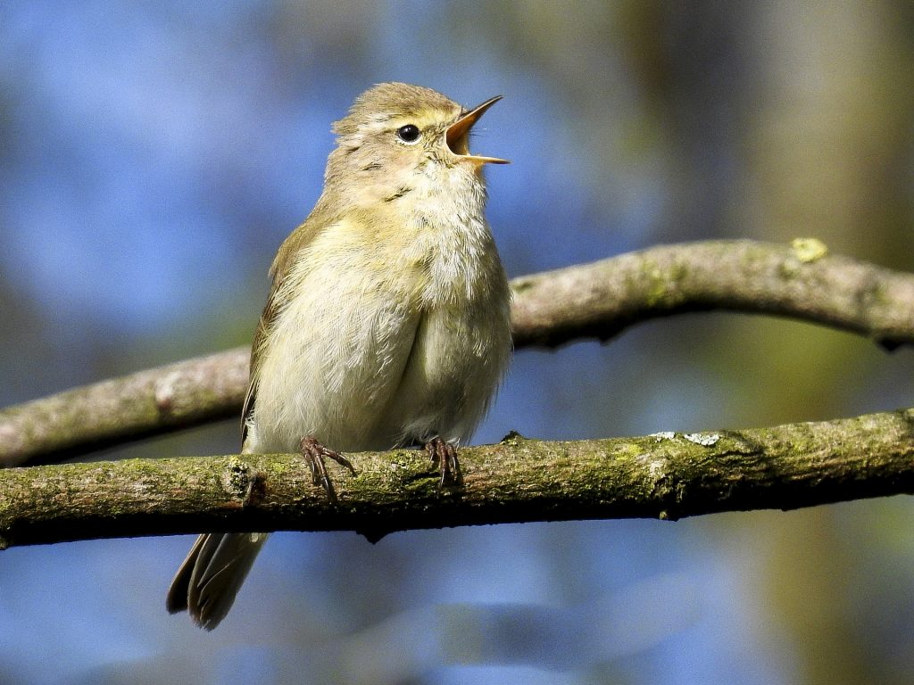 Vogelzählaktion