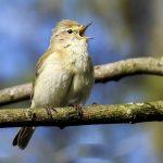 Umwelttag Vögelzählung