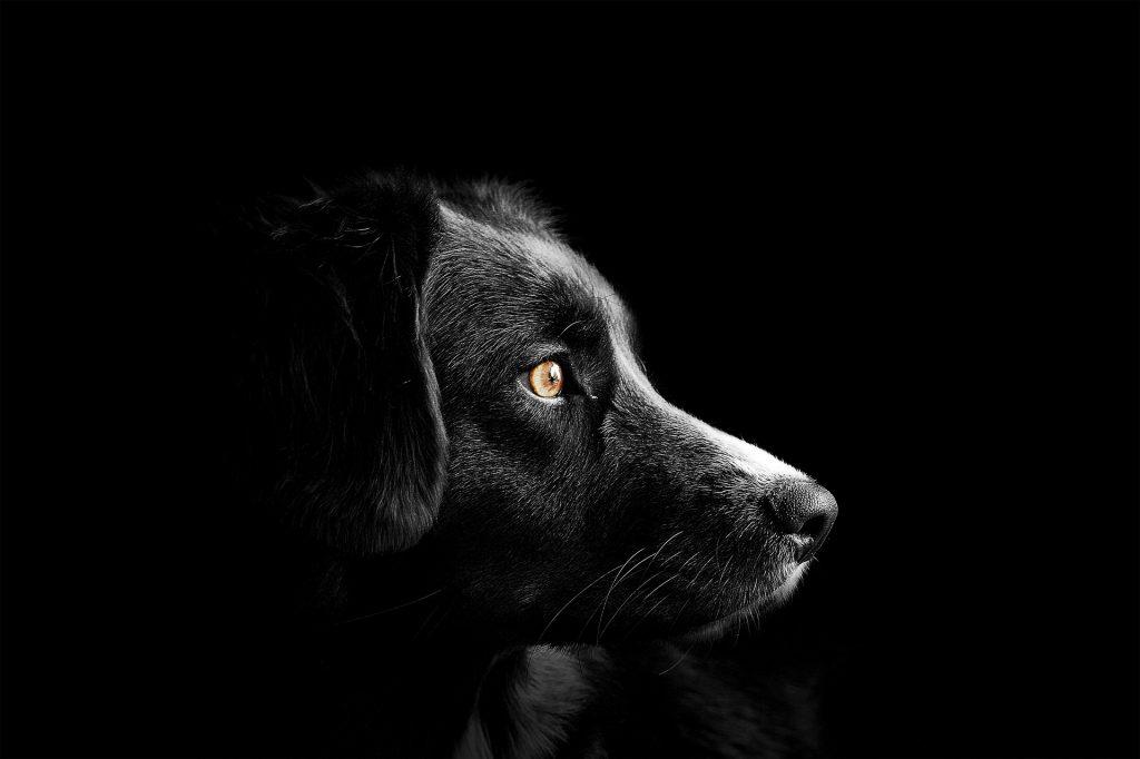 Tag des Hundes