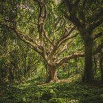 Umwelttag Tag des Waldes
