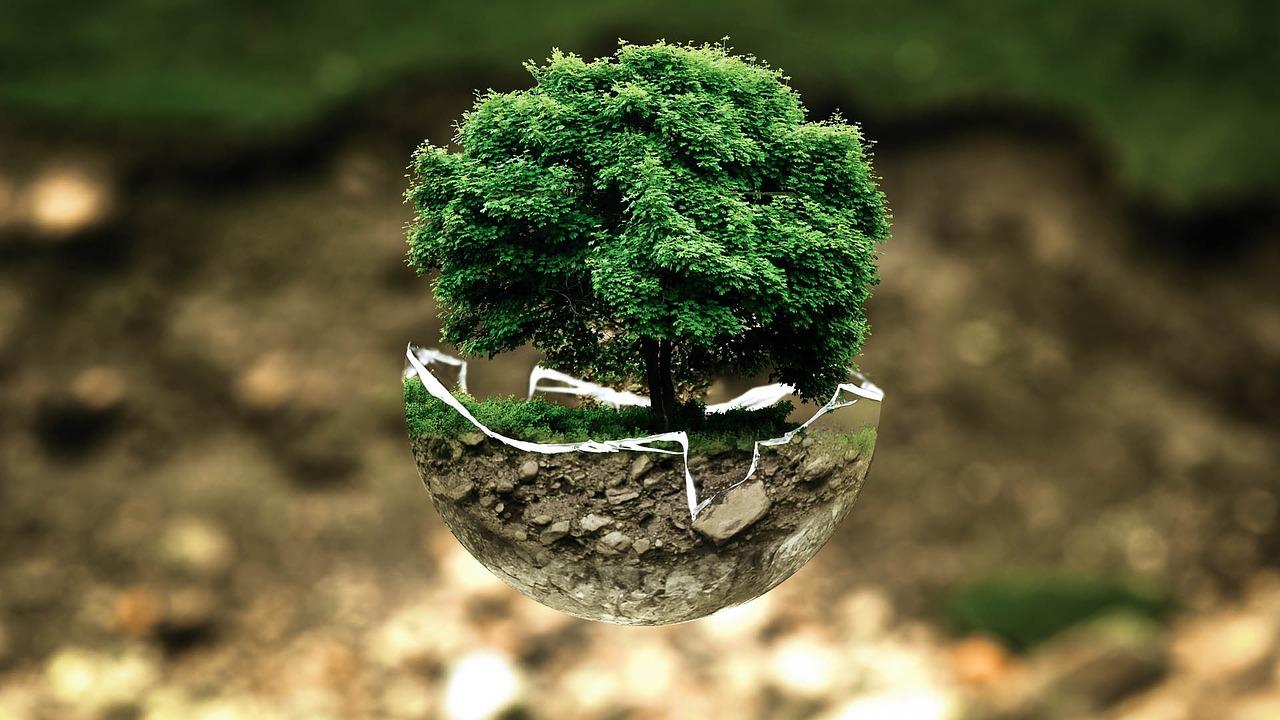 Tag des Baumes Südkorea