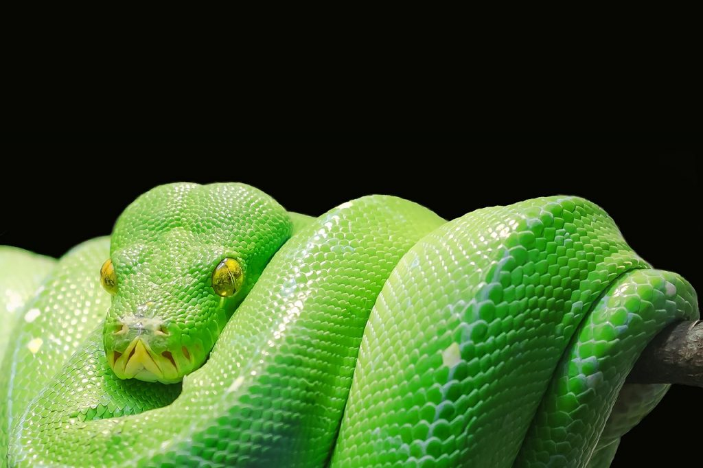 Weltschlangentag