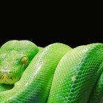 Umwelttag Weltschlangentag