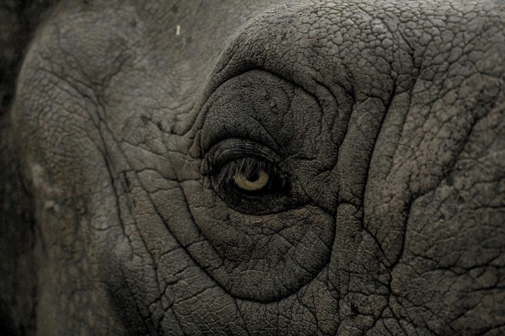 Weltelefantentag