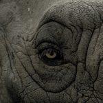 Umwelttag Weltelefantentag