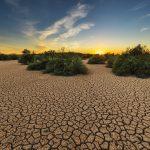 Umwelttag Weltbodentag