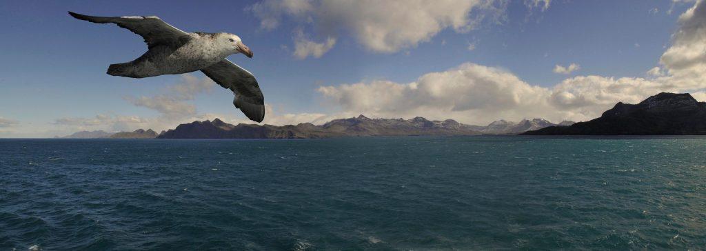 Welttag Vogelzug