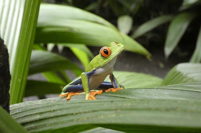Costa Ricas Nationalparks
