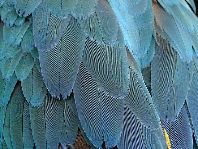 Vogeltag