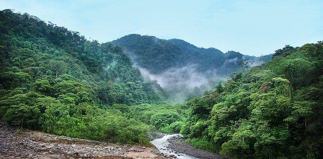 Tag des Baumes Costa Rica