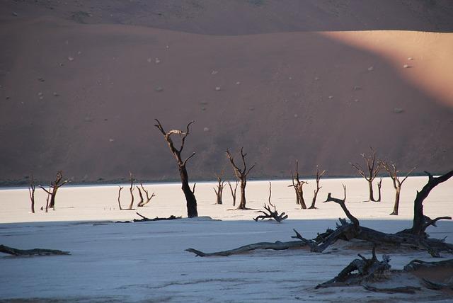 Tag des Baumes Namibia